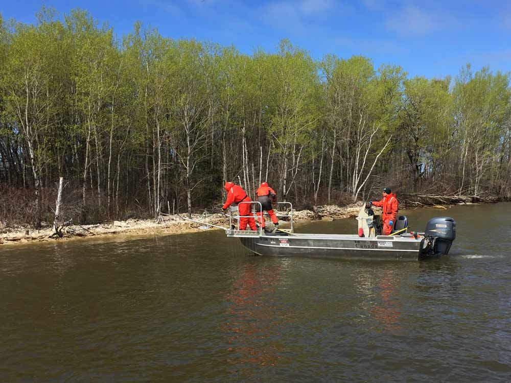 Electrofishing in Lake Winnipeg to catch fish to be tagged with transmitters. Credit: Camille Macnaughton, Fisheries and Oceans Canada