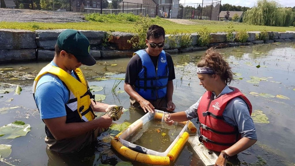 Akwesasne and River Institute partners for FINS (Fish Identification Nearshore Survey) on the St. Lawrence River