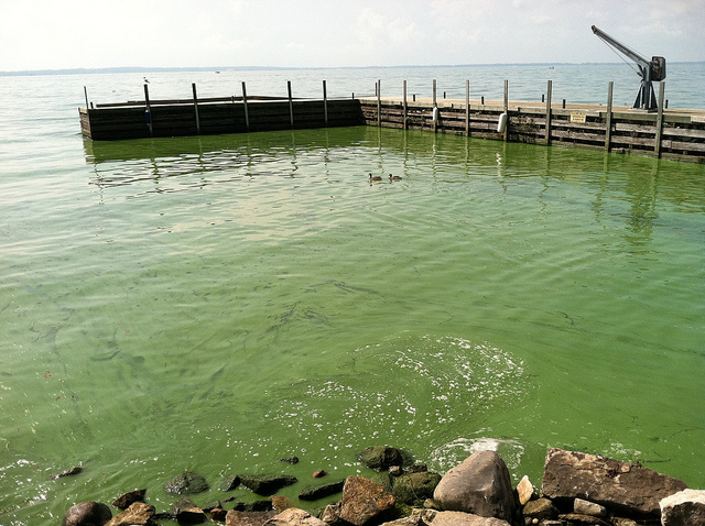 algal bloom lake erie noaa