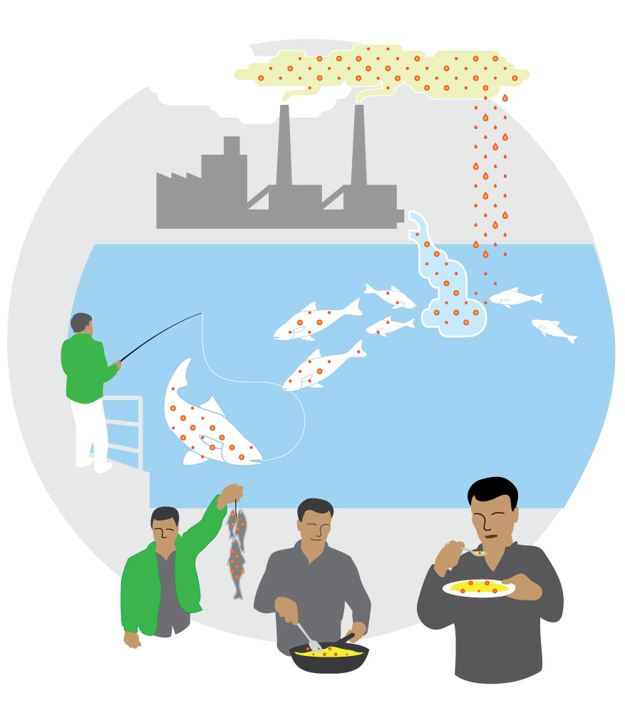 Une illustration tirée d'un guide de Buffalo Riverkeeper sur la consommation sécuritaire de poisson, qui est disponible en plusieurs langues, notamment en anglais et en français sur le site bnriverkeeper.org