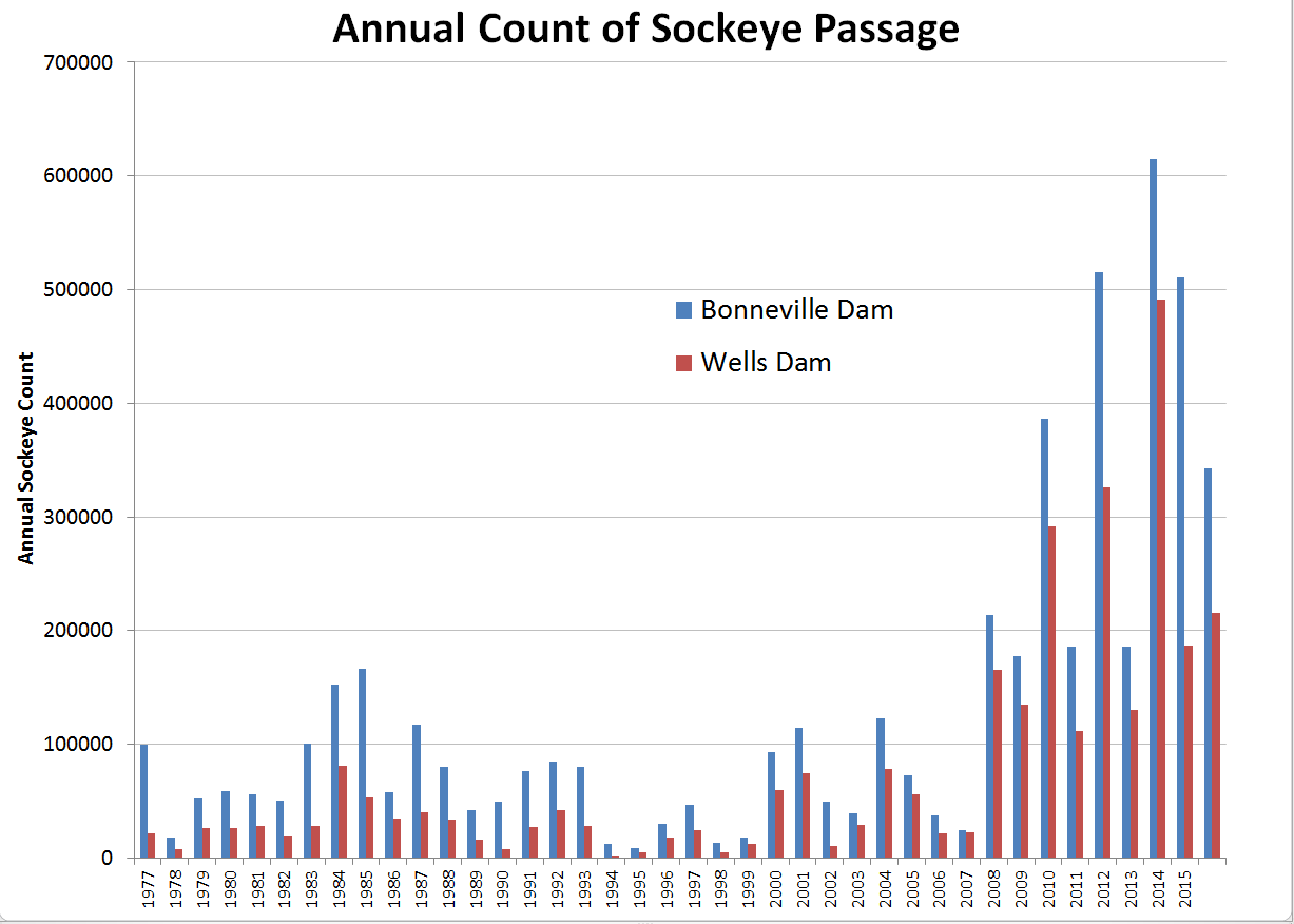 A graph showing sockeye passage past the Bonneville and Wells dams. Credit: Columbia Basin Research