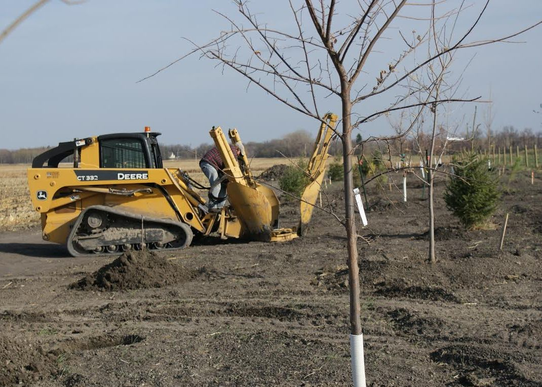 Trees being planted in Lagoon Park. Credit: Emerson, Manitoba.