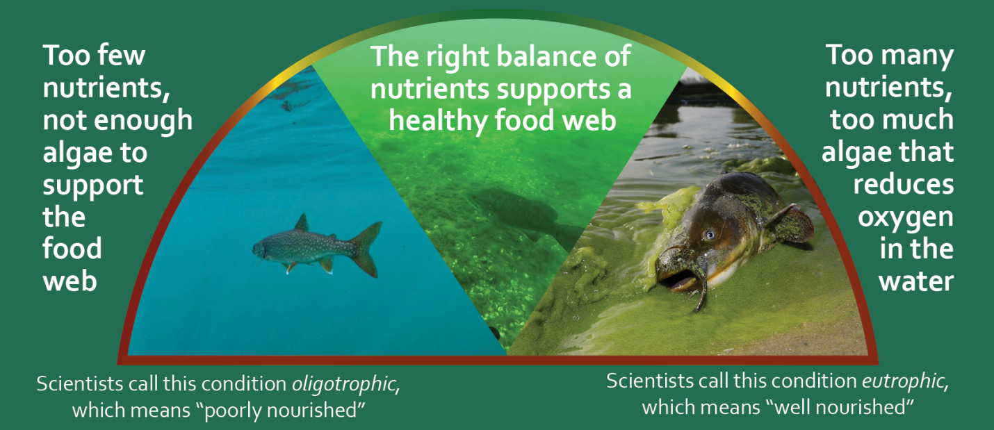 nutrients graphic