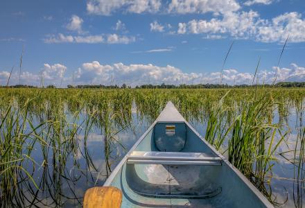 canoe and bed of wild rice in minnesota