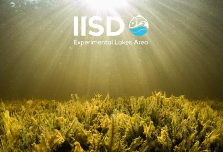 iisd ela background