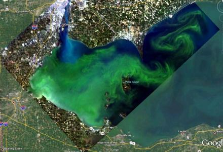 2011 harmful algal bloom in Lake Erie