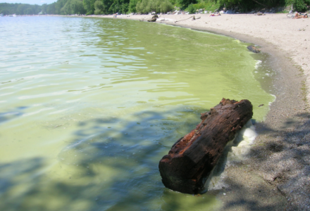 Water Matters - Blue-green algae bloom in part of Lake Champlain