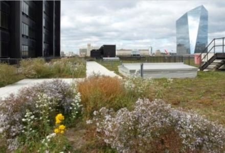rooftop with native plant garden