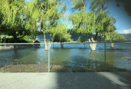 trees in osoyoos british columbia surrounded by floodwaters