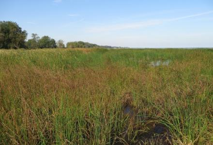 wetland saginaw bay assessment iwi report