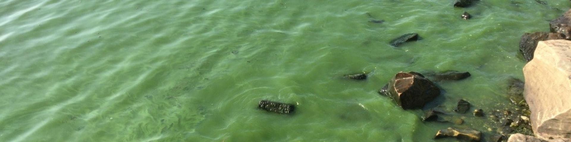 cyanobacteria bloom in Missisquoi Bay
