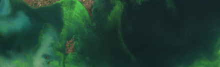 Satellite image of the 2011 Lake Erie algal bloom