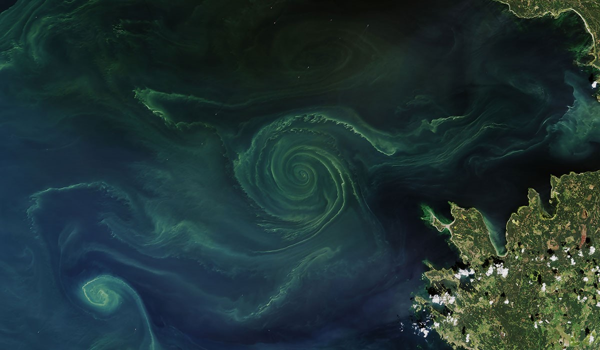 algal blooms baltic