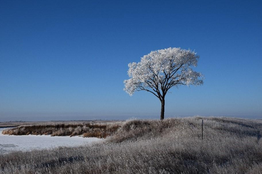tree usfws